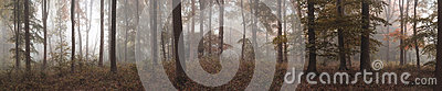 Large colorful panorama foggy Autumn Fall forest landscape