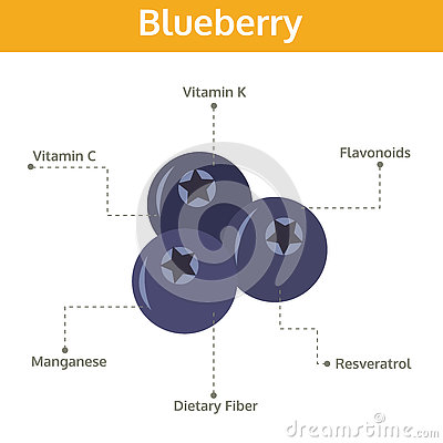 Blueberry nutrient of facts and health benefits, info graphic