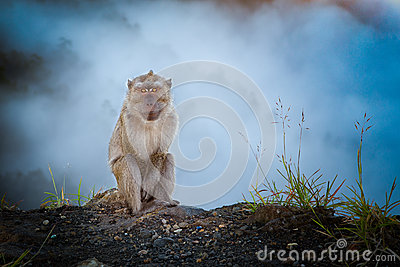 Monkey in the mist