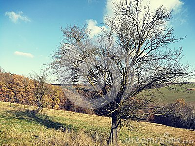 A undressed tree