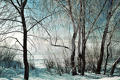 Winter scene -frosty snowy trees near the river at the winter sunrise