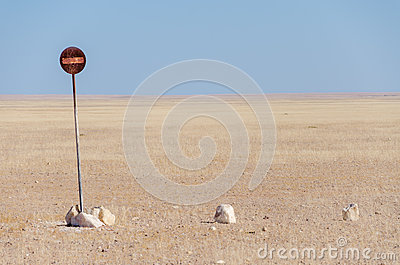 No entry or passage prohibited sign in the middle of the Namib Desert isolated in front of blue sky