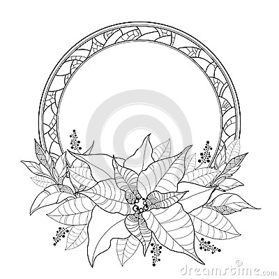 Vector Poinsettia or Christmas Star, leaves and ornate round frame isolated on white. Outline Poinsettia flower for winter