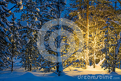 Winter night in forest and Christmas tree glowing lights