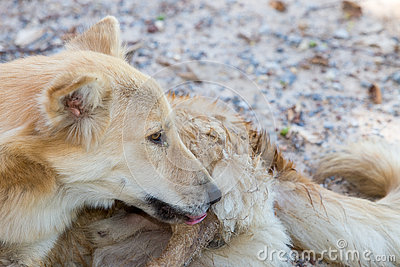 Dogs lick