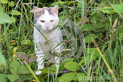 White cat glaring st the camera from the midst of a forestland