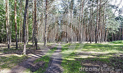 A view of forestland with multiple trees