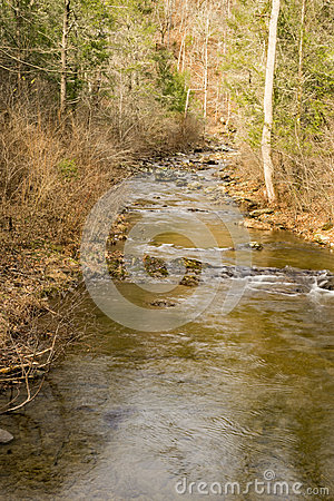 A Mountain Trout Stream in the Blue Ridge Mountains of Virginia, USA