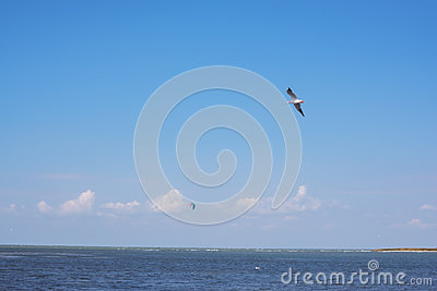 Bird flying over sea and on the horizon is seen kite
