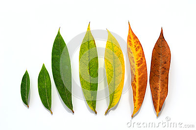 Different stages of life - Birth to death. Concept of growth leaf
