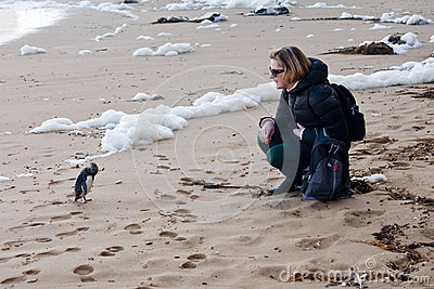 Close encounter with a penguin slammed by waves on the beach
