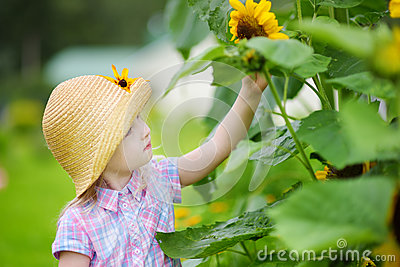 Cute little girl reaching to a sunflower in summer field