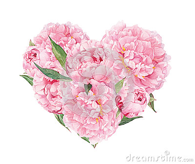 Floral heart - pink peonies flowers. Watercolor for Valentine day, wedding