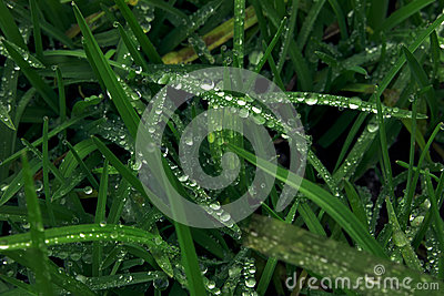 Green grass and water drops and insecto on top