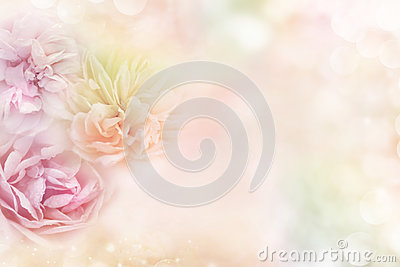 Roses in a soft pastel background, which conveys the concepts of love Valentine`s Day
