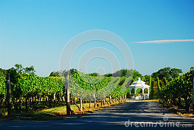Gazebo in the Vineyard