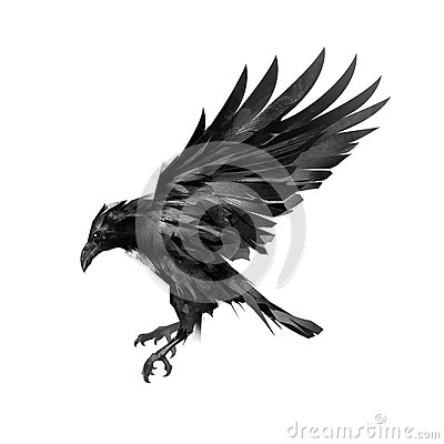 Drawing a sketch of a flying black crow on a white background