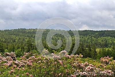 Landscape and sky at Dolly Sods wilderness, West Virginia, USA