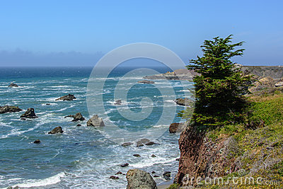 Lone pine tree on a cliff in the Pacific Ocean, Big Sur California USA