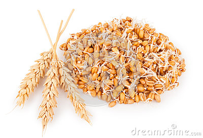 Wheat germ with ears