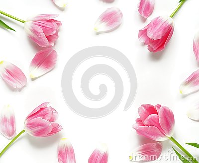 Floral pattern made of pink tulips on white background. Flat lay, top view. Pattern of flowers. Flowers pattern texture. frame