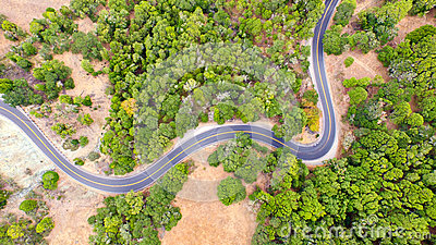 Twisting road among trees