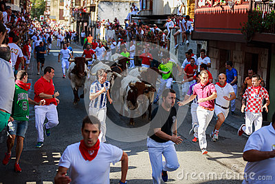 AMPUERO, SPAIN - SEPTEMBER 10: Bulls and people are running in street during festival in Ampuero, celebrated on September 10, 2016