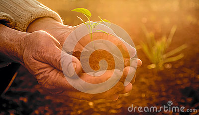 Old Peasant Hands holding green young Plant in Sunlight Rays