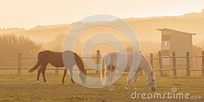 Two horses in sunset