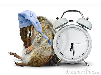 Funny animal chipmunk sleep with clock blank and sleeping hat