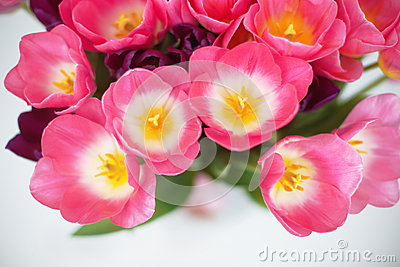 Pink tulips flower on white background. a greetings car