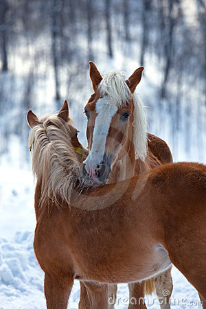 Affectionate horses