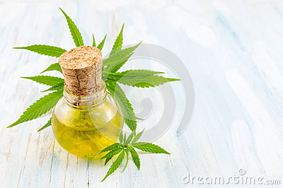 marijuana plant and cannabis oil