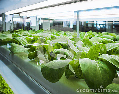 Greenhouse Plant row Grow with Led Light Indoor Farm Agriculture