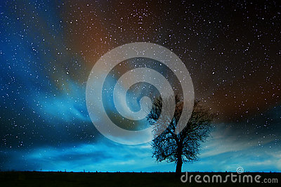 Lone tree in starry night