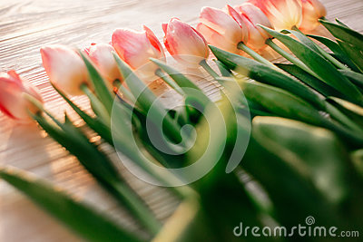 Pink tulips on white rustic wooden background. spring flowers i