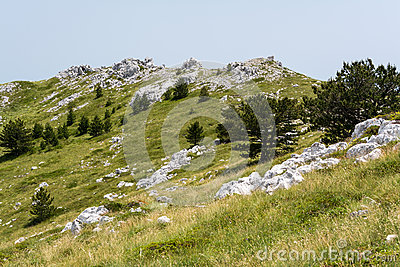 Peaceful alpine meadow with wide mountain trees in  Biokovo national park in Croatia