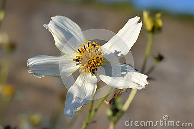Uncommon white flower
