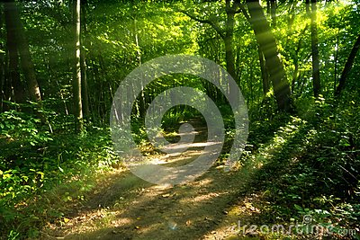 Mysterious Wooded Path