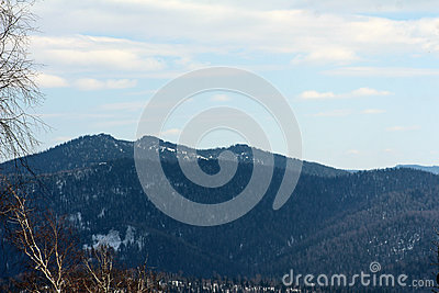 View on treed mountain