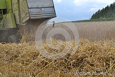 Combine throws straw out