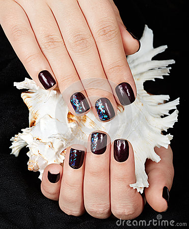 Hands with short manicured nails colored with dark purple nail polish holding a sea shell
