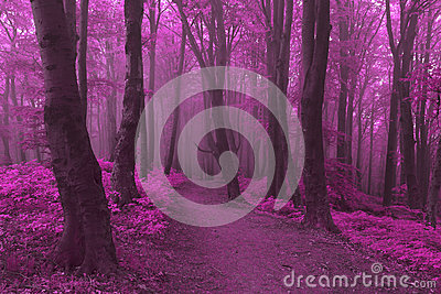 Dreamy trail in foggy forest