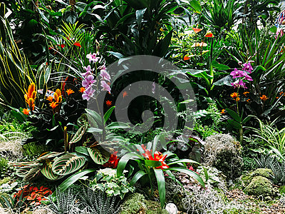 Colorful Exotic Flowers In Garden
