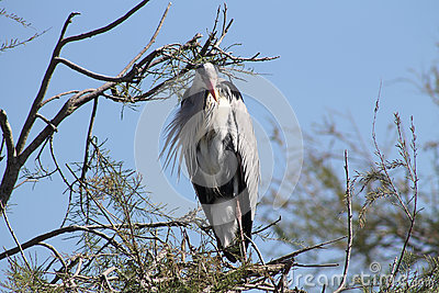 Stork on branch of a tree