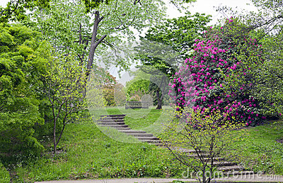 Stairs to a bench in lush english garden