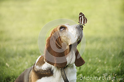 Cute dog with butterfly on his nose