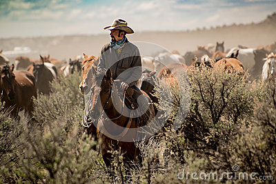 Cowboy leading horse herd through dust and sage brush during roundup