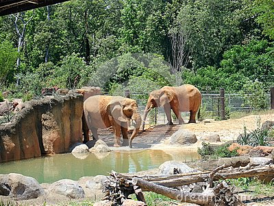 Elephants at zoo