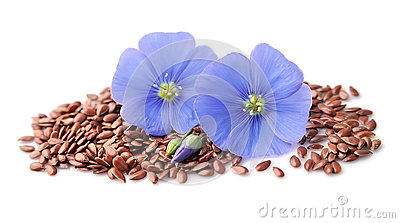 Flax seed and flax flowers .